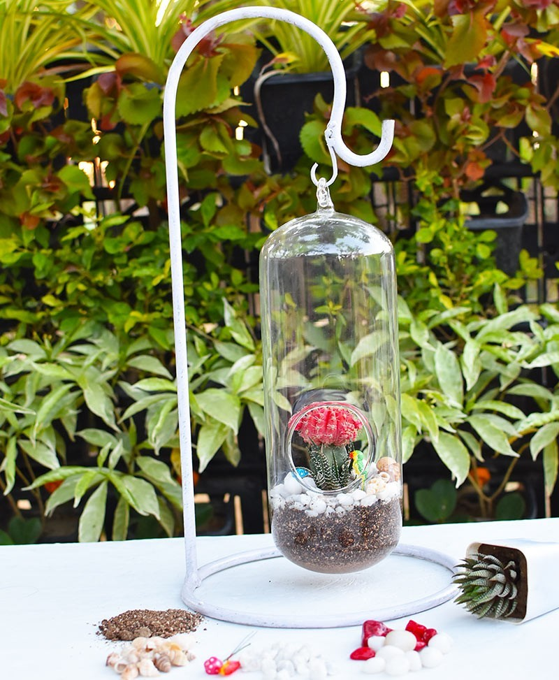 Long Capsule Type Terrarium with Grafted Cactus and Deco Mates