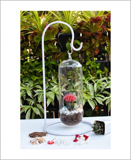 Long Capsule Type Terrarium with Grafted Cactus