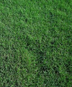 Carpet Grass Gurgaon - Lawn Grass Gurgaon - Artificial Grass Gurgaon