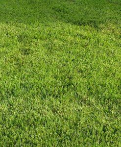 Carpet Grass Delhi - Lawn Grass Delhi - Artificial Grass Delhi
