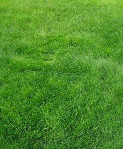 Carpet Grass Noida - Lawn Grass Noida - Artificial Grass Noida