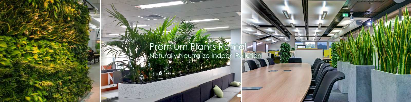 Corporate Air Purifier Office Plants Rental Services Gurgaon, Delhi, Noida
