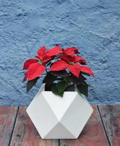Geometric Shape Polygon Planter 12 inch