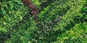 Plastic Pots Green Wall Paralax