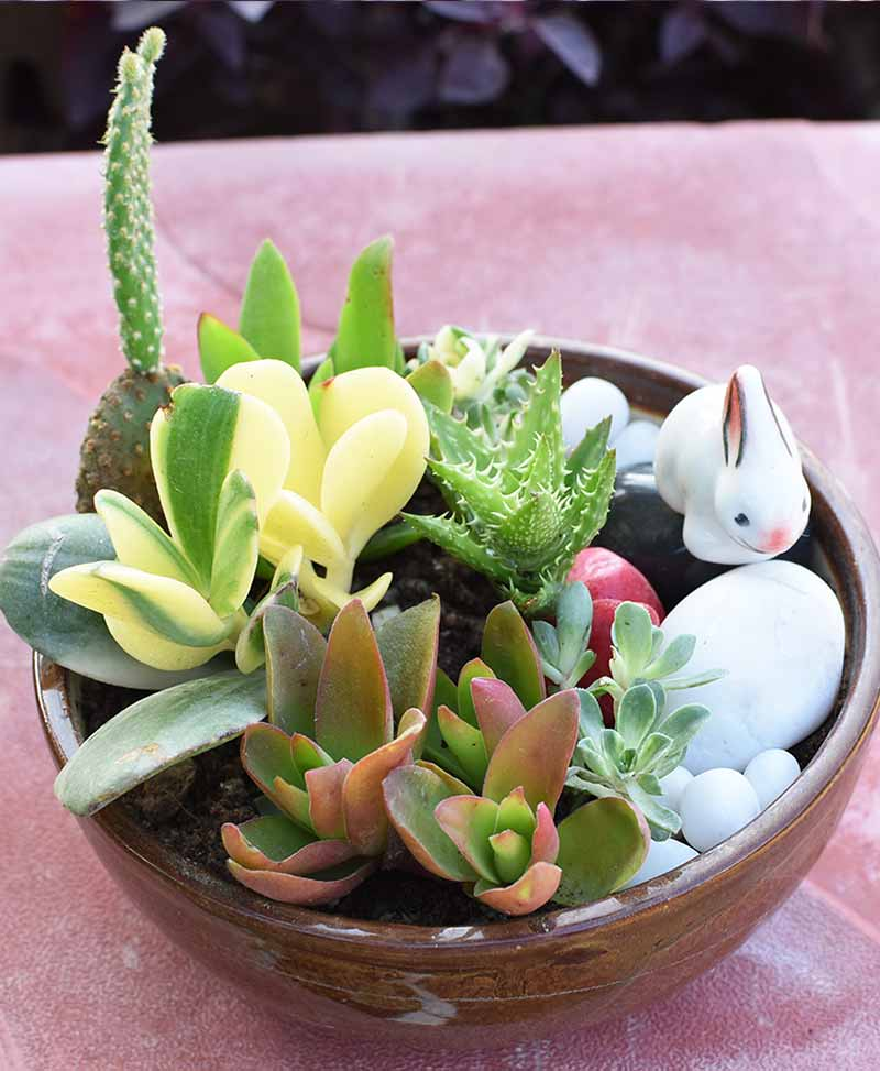 Ceramic Succulents Bowl