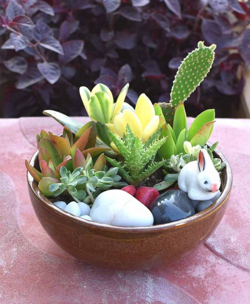 Ceramic Succulents Bowl 1