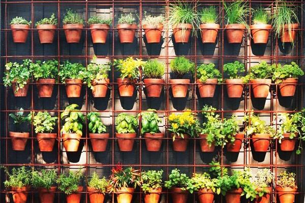 Rack Stack Garden