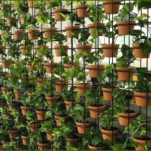 Rack Wall Garden