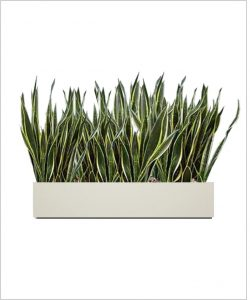 Rectangular Fiber Box Tray Sleek Planter 30 inch