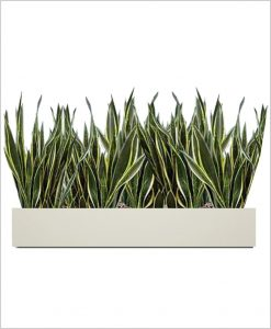 Rectangular Fiber Box Tray Sleek Planter 36 inch