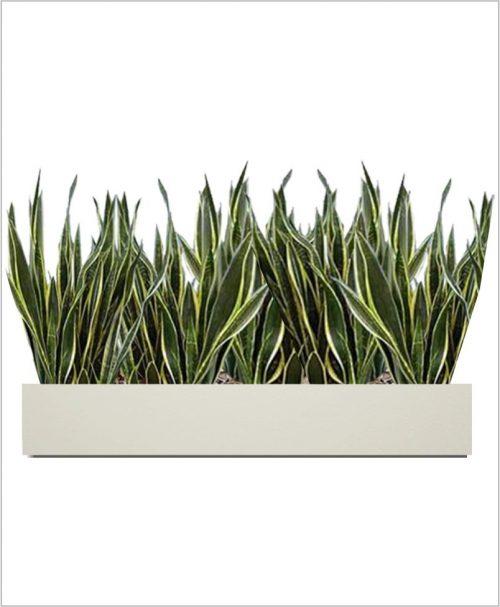 Rectangular Fiber Box Tray Sleek Planter 36 inch