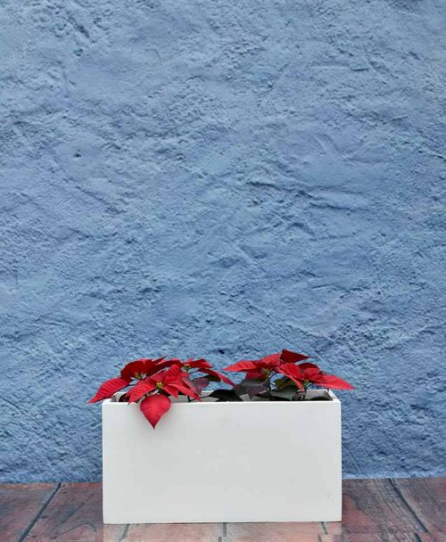 Rectangular Planter 24 inch