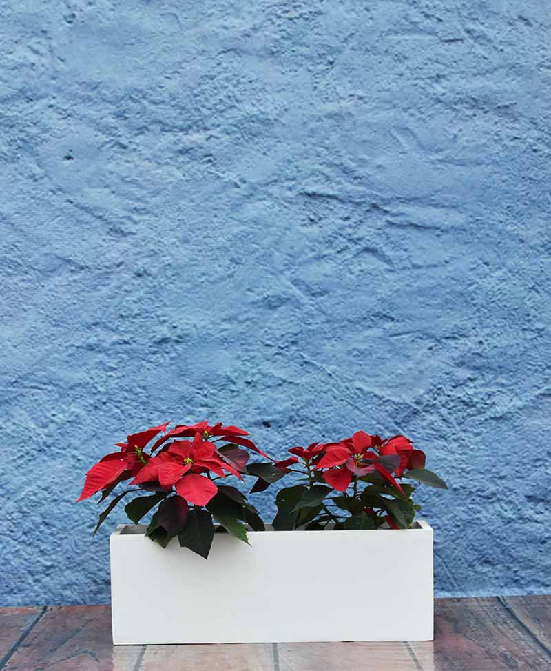 Rectangular Planter 24 inch Sleek