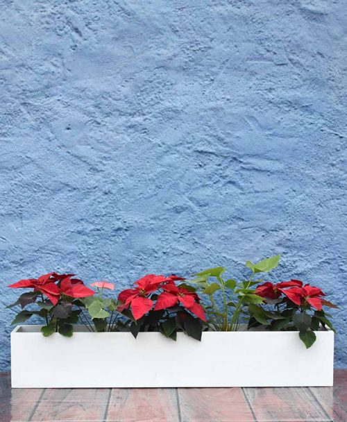 Rectangular Planter 48 inch Sleek