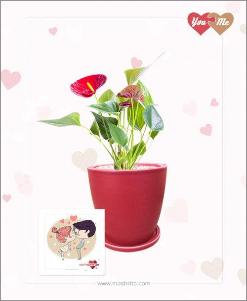Anthurium Red in Red Oval Ceramic Pot