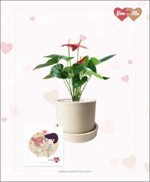 Anthurium Red in Off White Ceramic