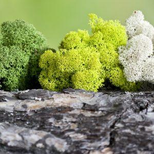Scandinavian Moss Wall