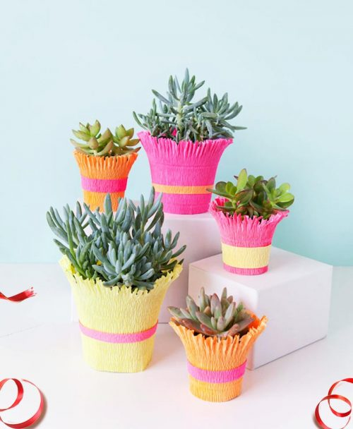 Best Gift Plants