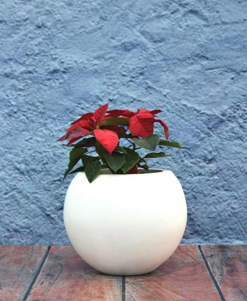 Geometric Shape Sphere Planter 12 inch