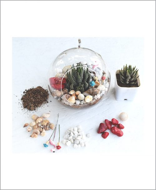 Hanging Sun Shape Without Base Type Terrarium Bowl with Haworthia