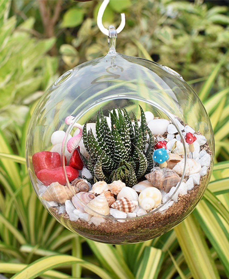 Hanging Sun Shape Without Base Type Terrarium Bowl with Haworthia and Deco Mates