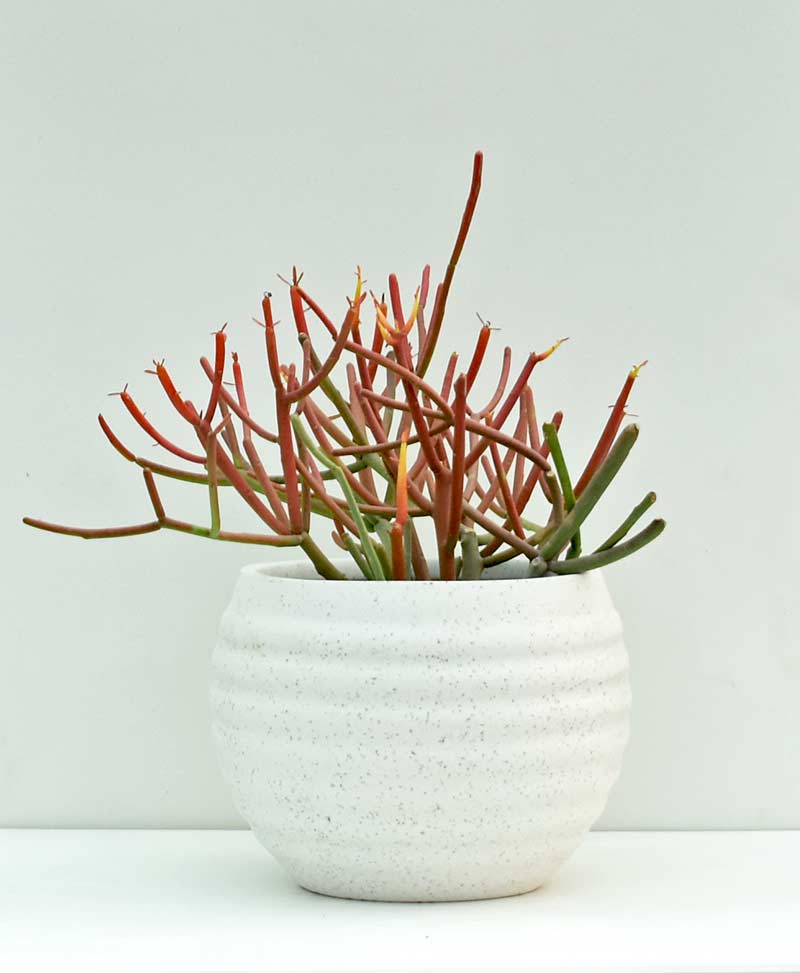 Table Top Fiber Terrazzo Planter Sphere Ribbed 7 inch