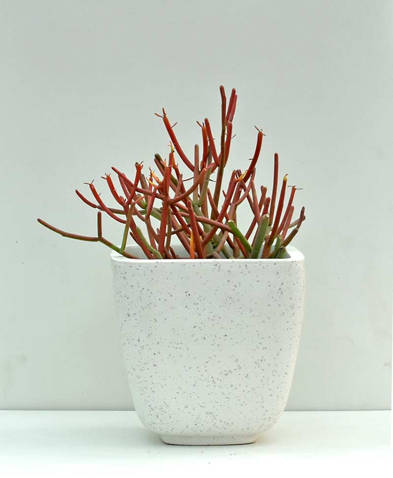 Table Top Fiber Planter Semi Cup Textured 6 inch