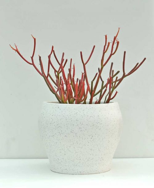 Table Top Fiber Planter Semi Sphere Textured 6 inch