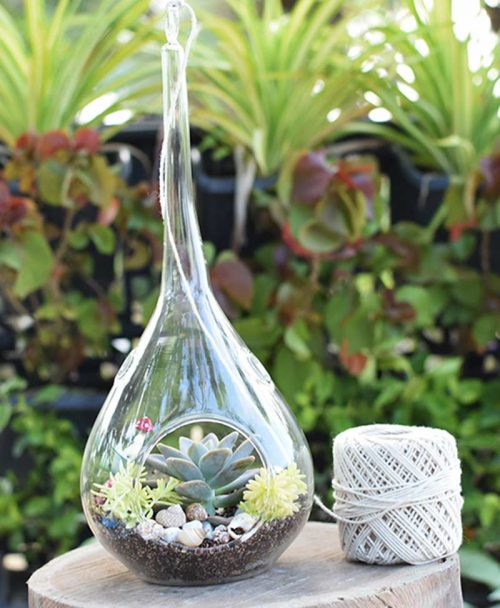 Hanging Tear Drop Type Terrarium with Echeveria