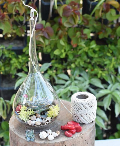 Hanging Tear Drop Type Terrarium with Echeveria and Deco Mates