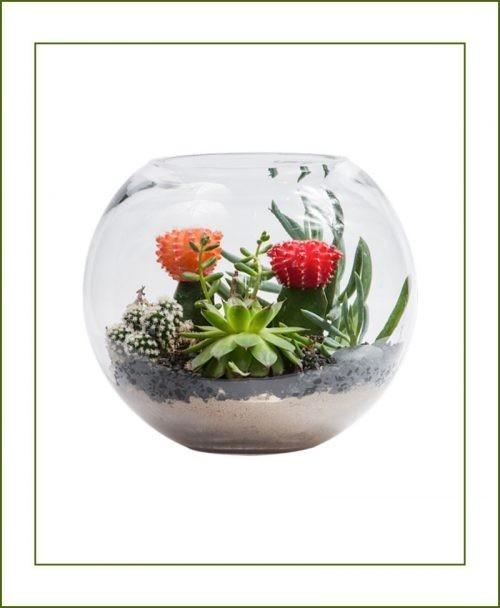 Terrariums Pots