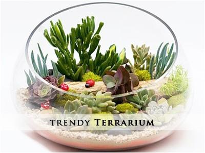 Trendy Terrarium Gardens
