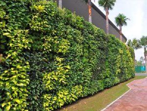Vertical Garden Project 2