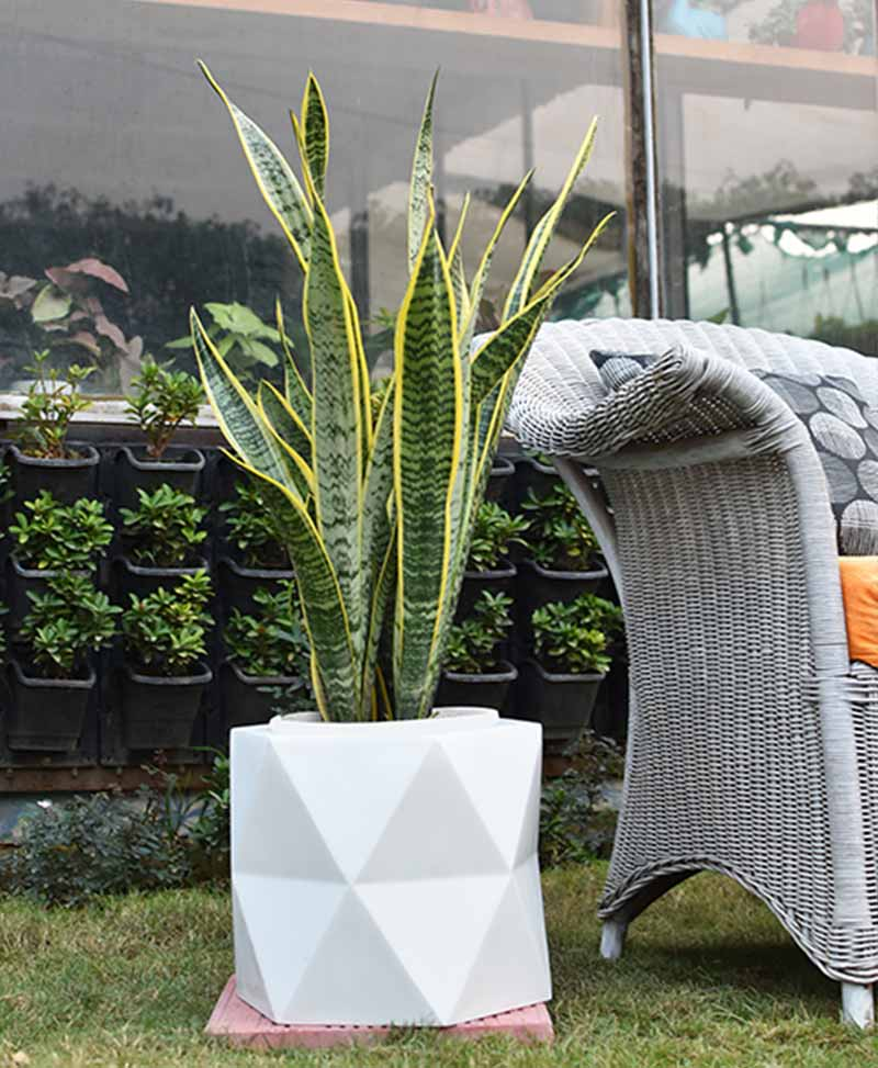Fiber Glass Hexagon Shape Planter with Snake Plant Variegated (Sansevieria)