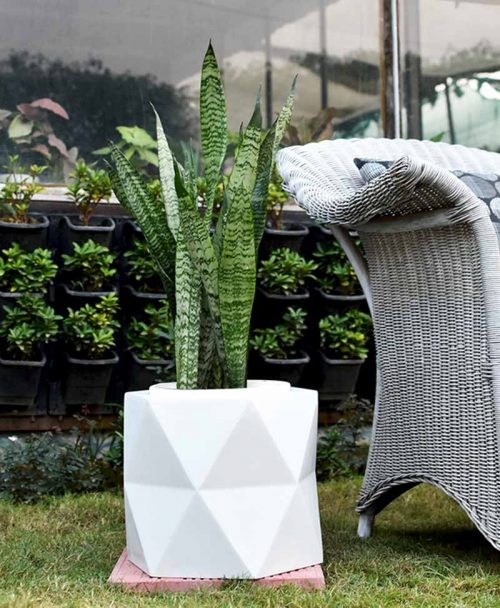 Fiber Glass Hexagon Shape Gray Planter with Snake Plant Green (Sansevieria)