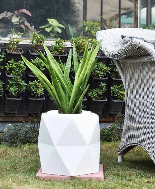 Fiber Glass Hexagon Shape Gray Planter with Snake Plant Francisii (Sansevieria)
