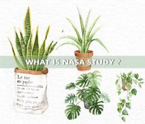 What is NASA clean air study?