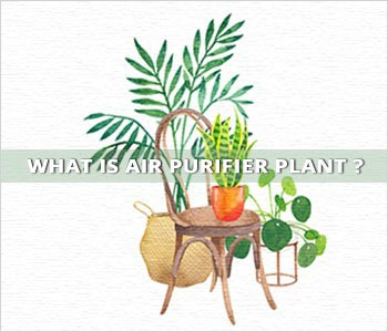 What is air purifier plant?