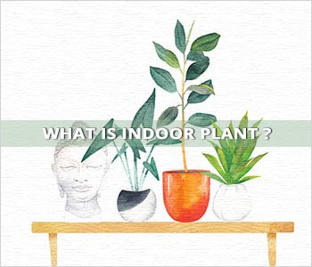 What is indoor plant?