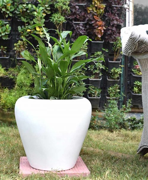 Fiber Glass White Apple Shape Planter with Peace Lily (Spathiphyllum)