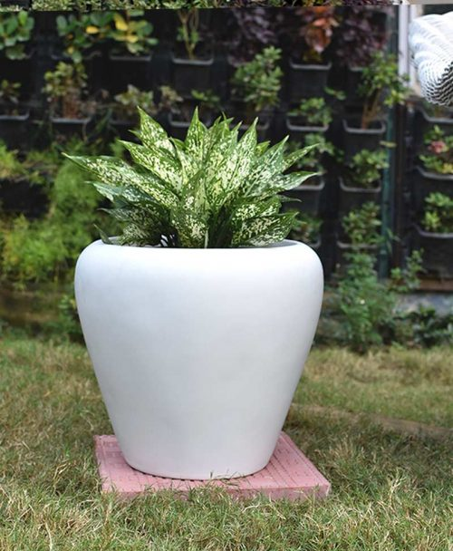 Fiber Glass White Apple Shape Planter with Aglaonema Snow White