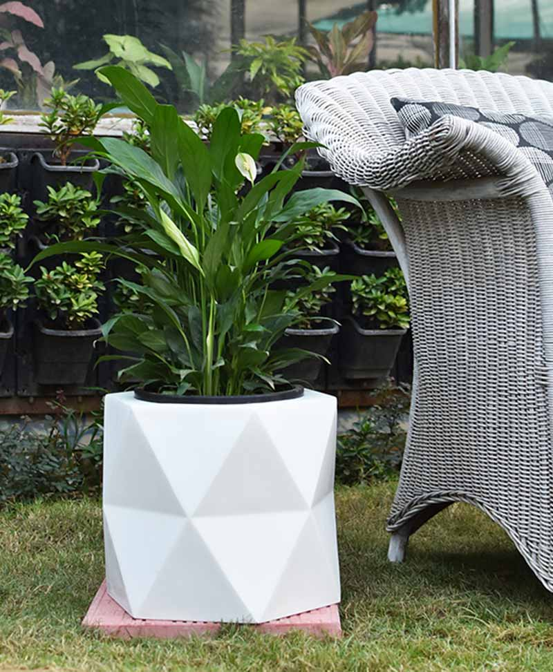 Fiber Glass Hexagon Shape Gray Planter with Peace Lily (Spathiphyllum)