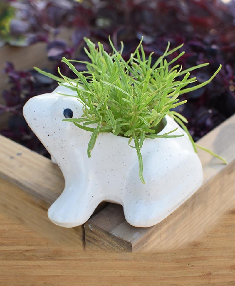 Ceramic Kids Frog Planter White 4 inch