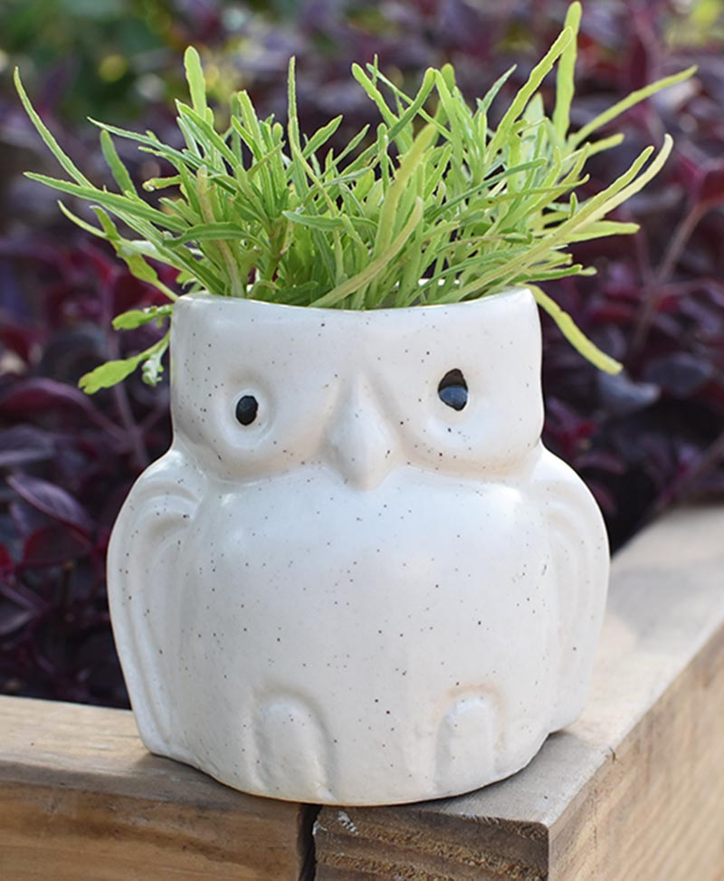 Ceramic Kids Owl Planter White 4 inch