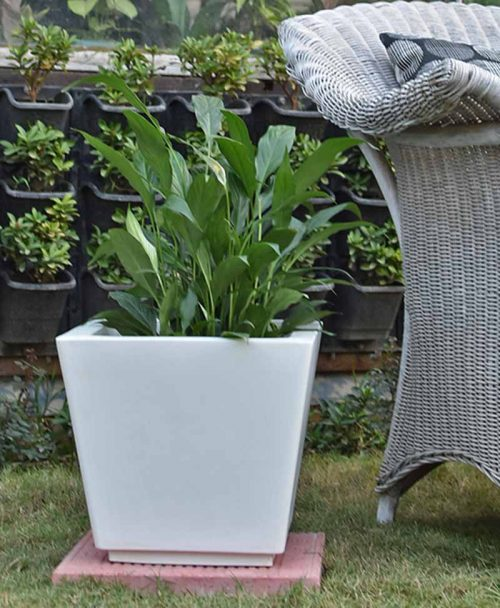Fiber Glass Tapered Shape Planter with Peace Lily (Spathiphyllum)