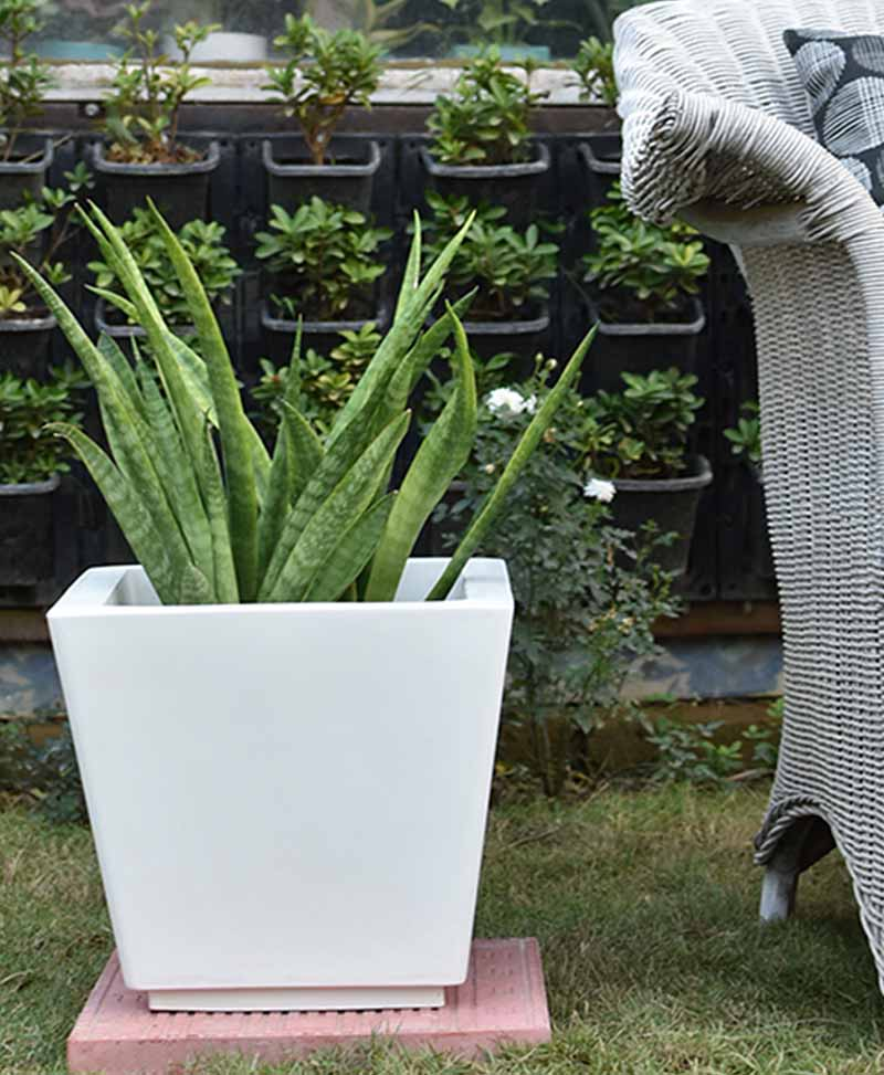 Fiber Glass Tapered Shape Planter with Snake Plant Francisii (Sansevieria)