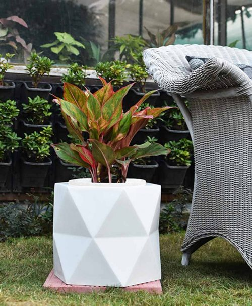Fiber Glass Hexagon Shape Gray Planter with Aglaonema Red