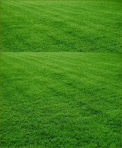 selection no 1 grass