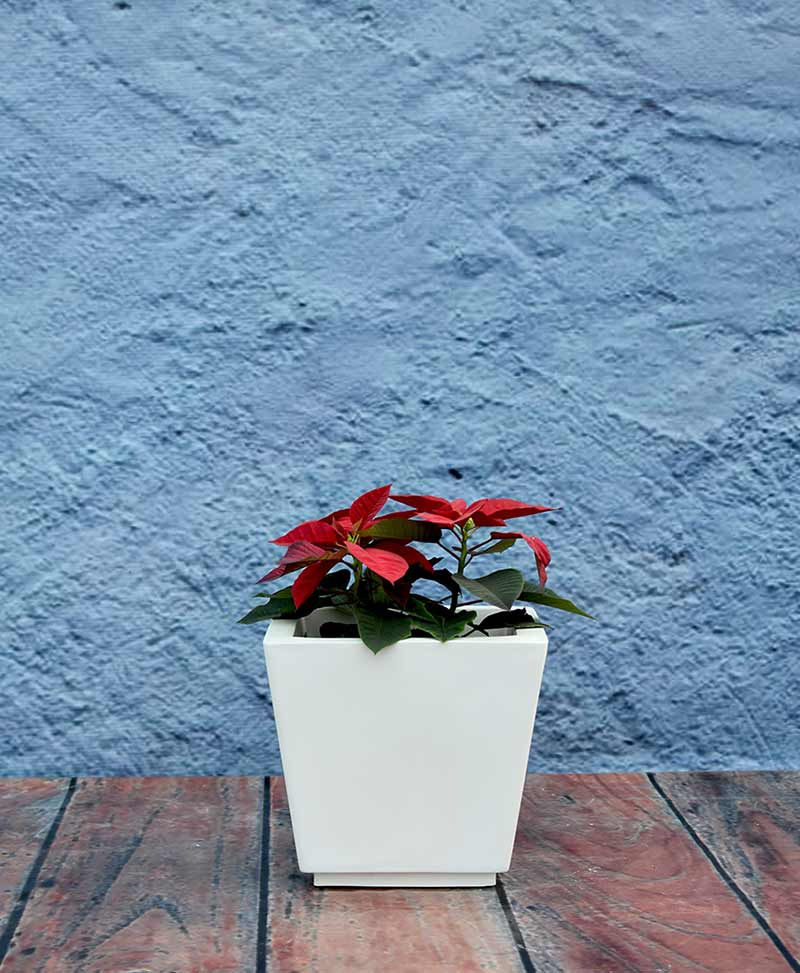 Tapered Shape Raised Planter 14 Inch